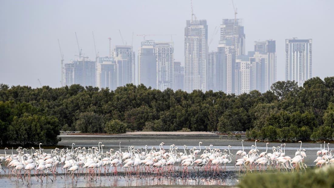 در سال های اخیر تلاش های زیادی برای احیای زمین در امارات صورت گرفته که در جریان زمین های بی آب و علف و باتلاق ها به اکوسیستم هایی زنده تبدیل شده اند.